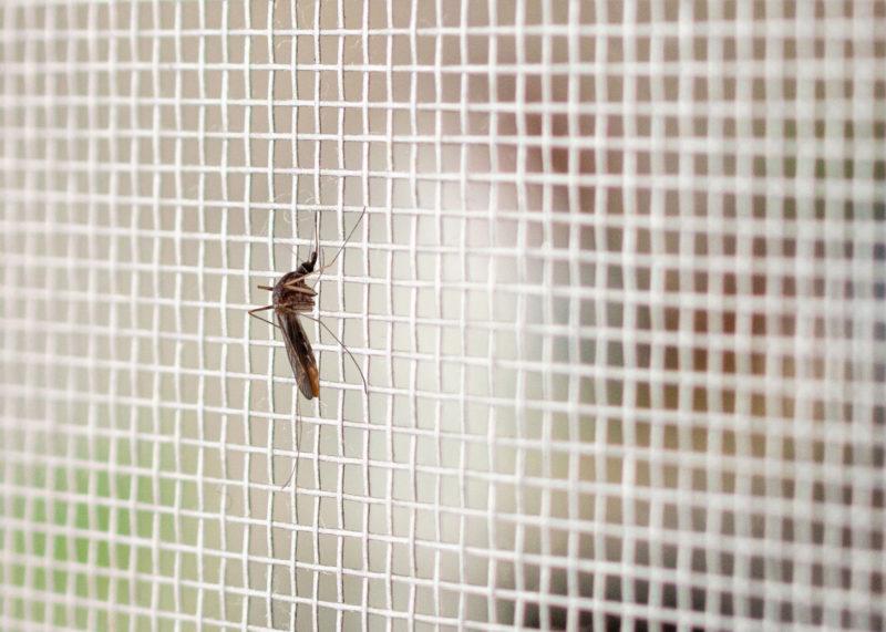 Komár na síti proti hmyzu