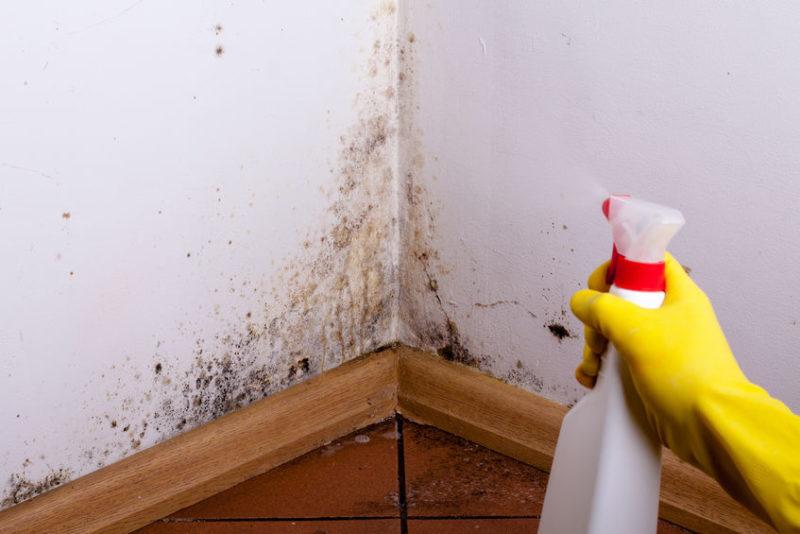 Striekanie fungicídneho roztoku na pleseň na stenách